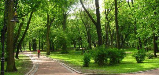 В Іспанії побудують парки, призначені для алергіків. На території цих парків не будуть посаджені дерева, які вважають алергенами.