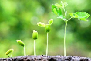 Курсовая работа по ботанике на заказ